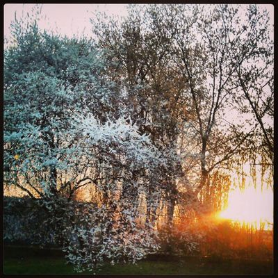 Springing Spring!