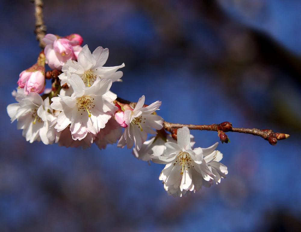 ~ springtime ~