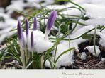 SpringTime (2)