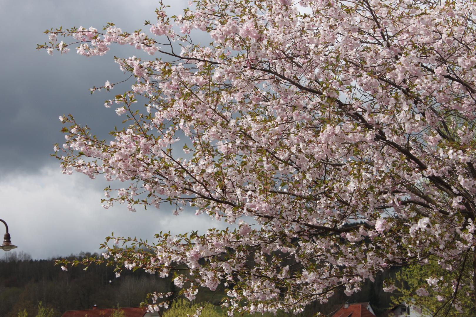 Springtime..