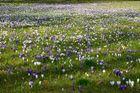 -springtime-