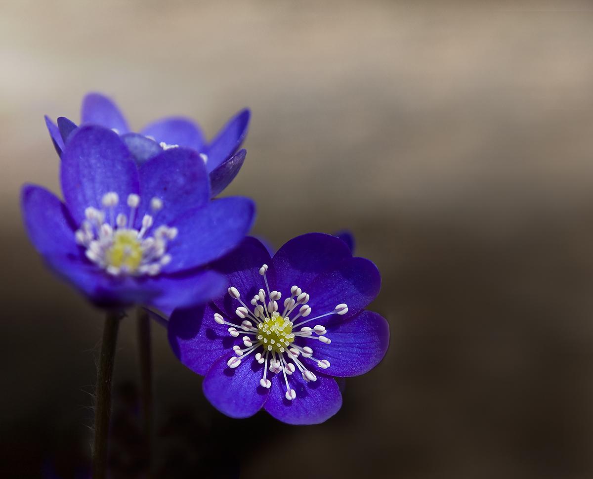 ...springtime...