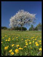 Springtime in Austria
