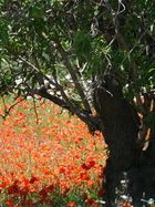 springtime in fasano/puglia/southern italy
