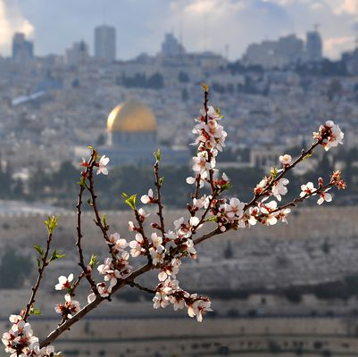 Springtime in Jerusalem   Frühling in Jerusalem