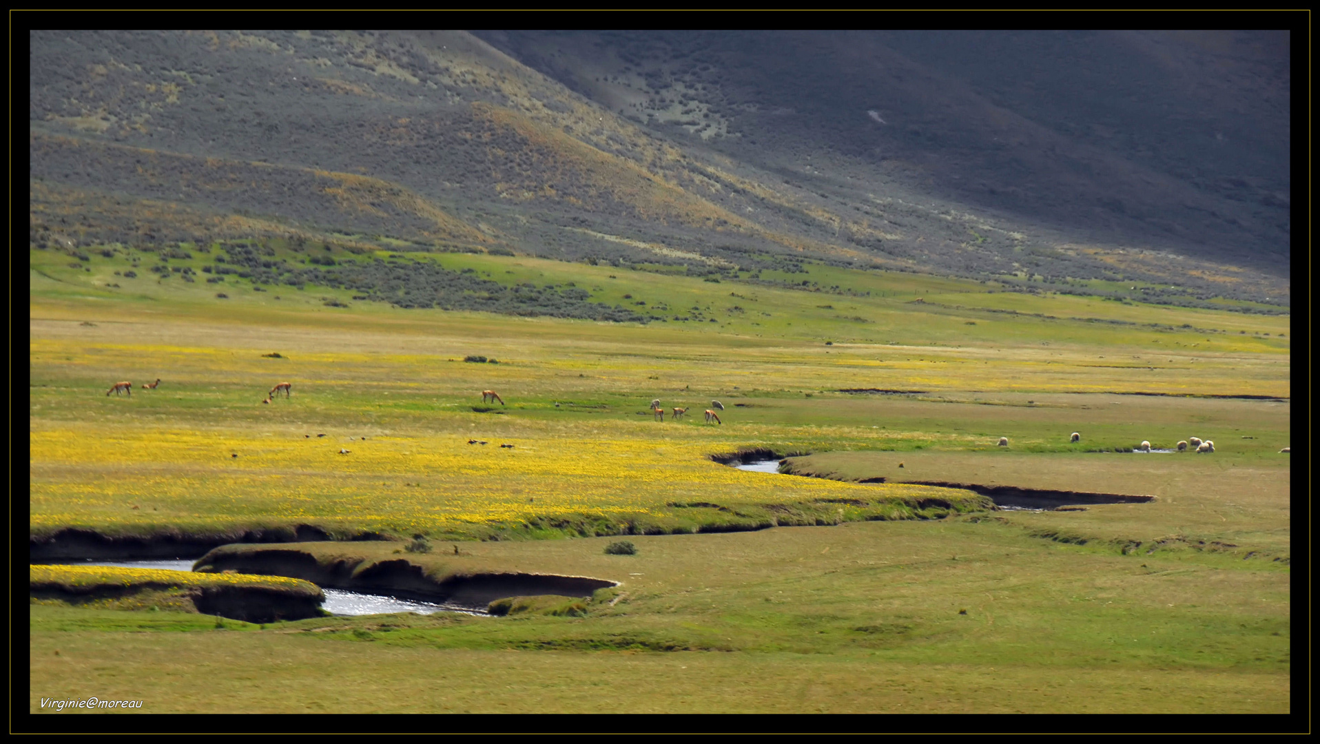 Springtime in Patagonia