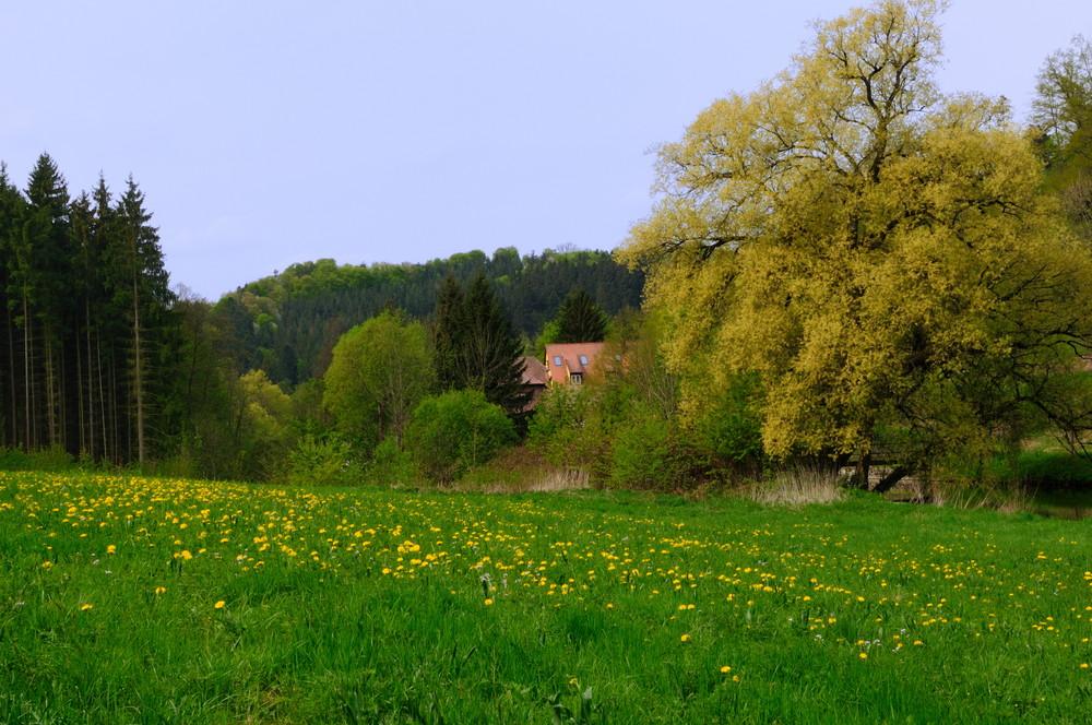 springtime serenade (7)