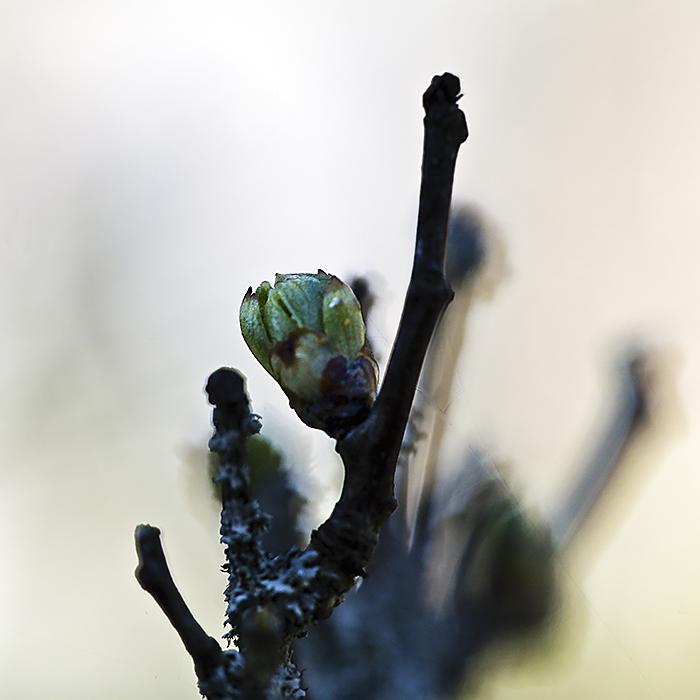 springtime VI