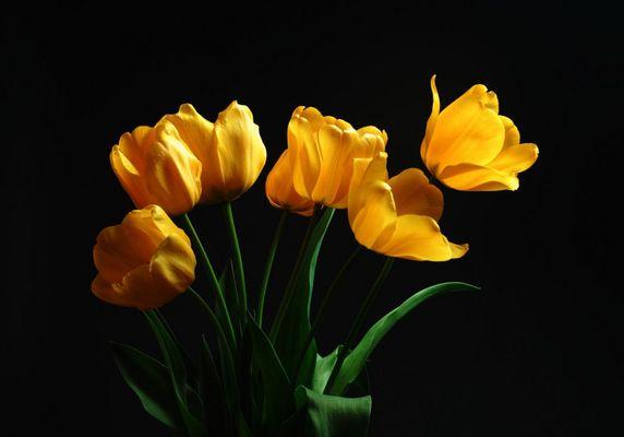 Springtime VII