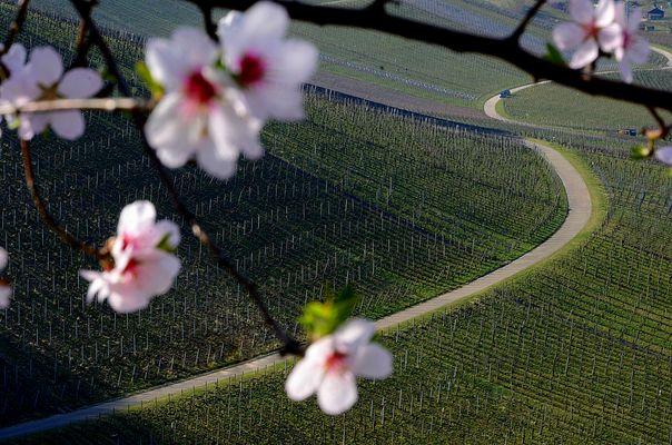 spring.wine