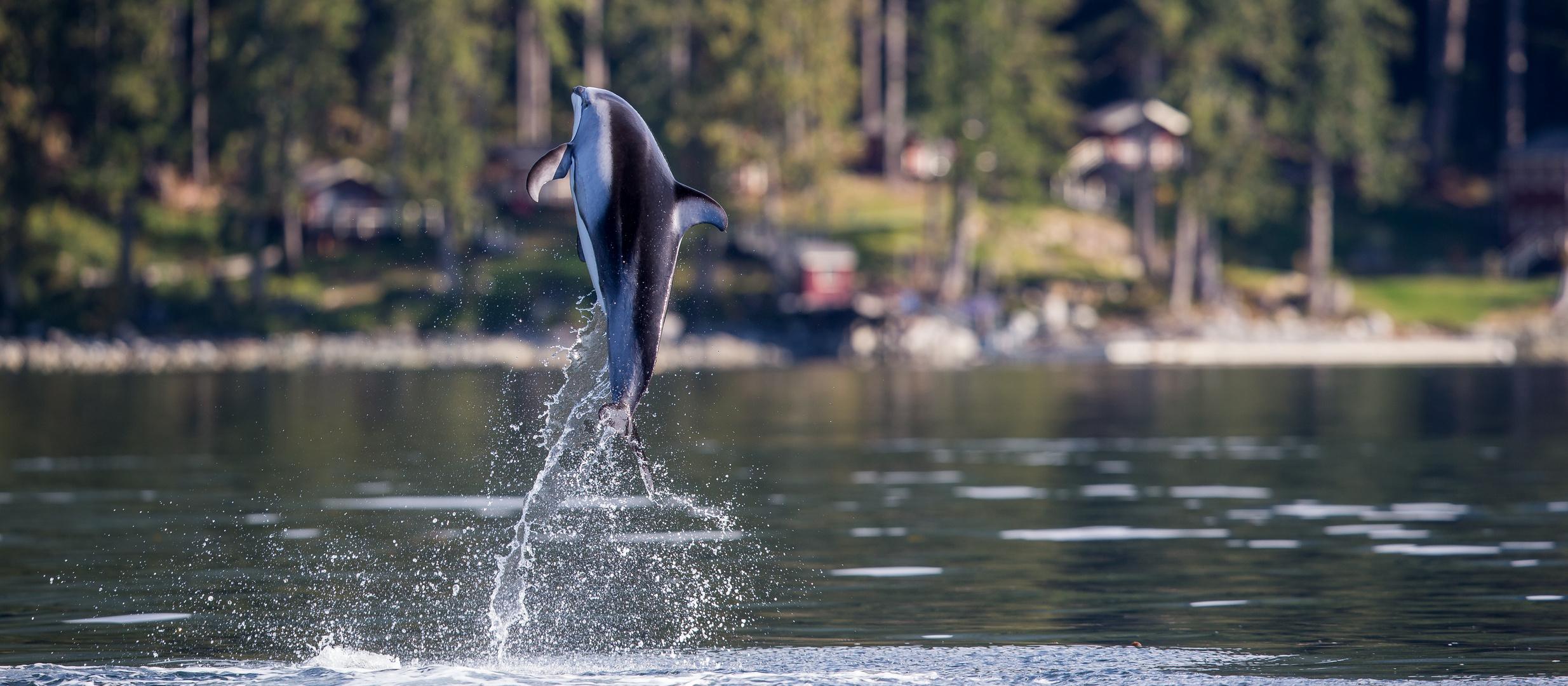 Sprung aus dem Wasser