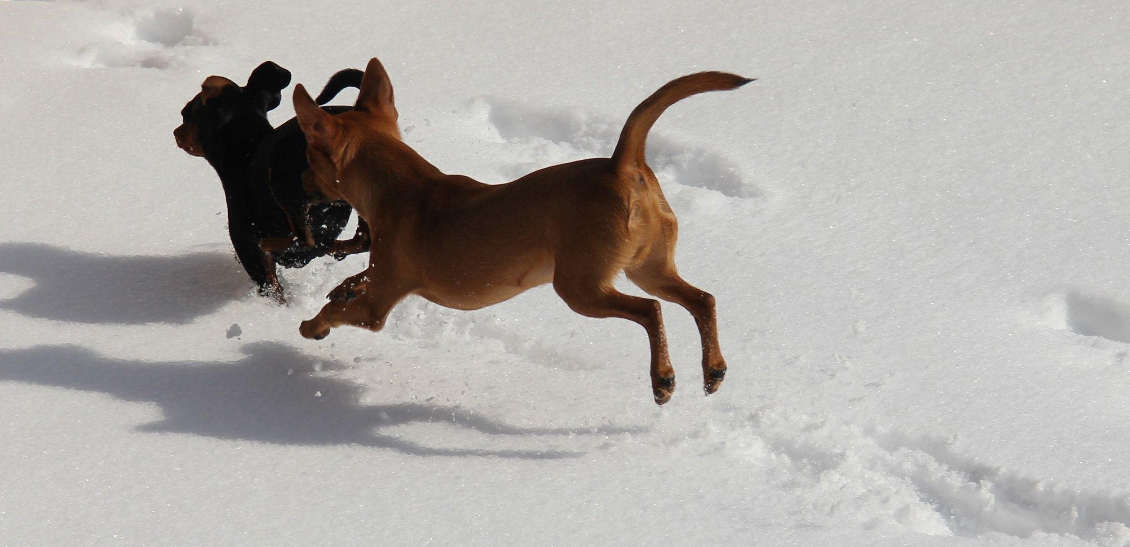 Sprung in den Schnee