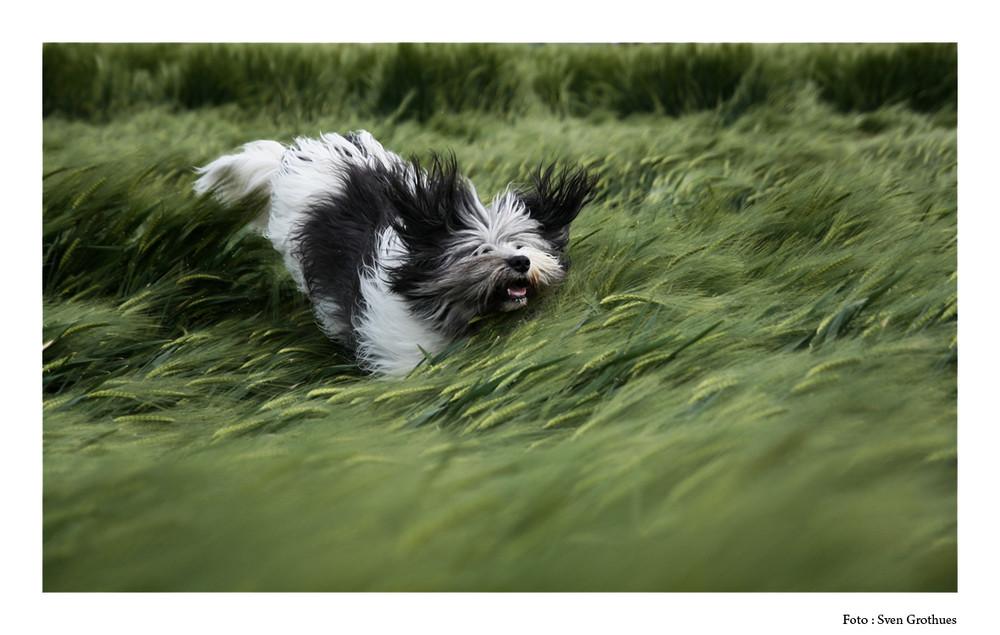 Sprung ins Gras