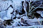 spürbare Kälte auf der Erde und in der Natur