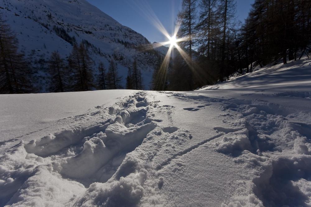 Spuren der Schneeschuhe