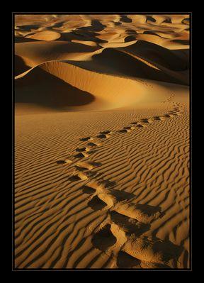 Spuren der Wüste