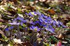 Spuren des Frühlings