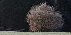 Spuren des Herbstes (2)