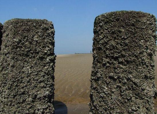 Spuren des Meeres