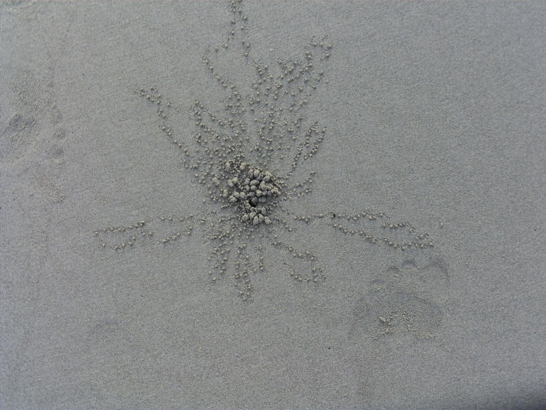 Spuren einer Strandkrabbe