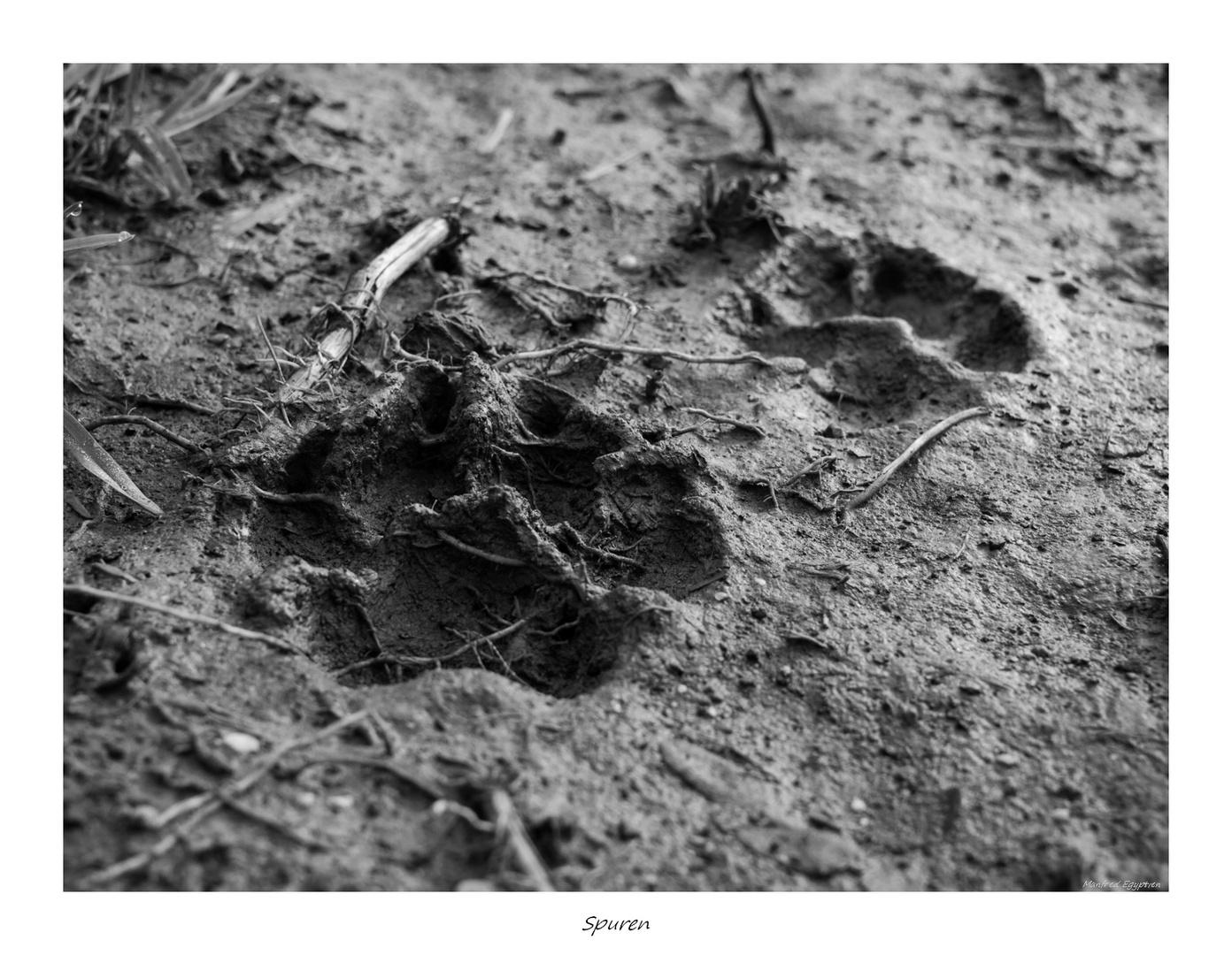Spuren