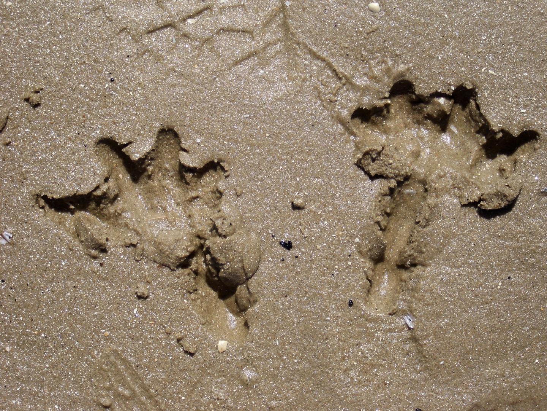 Spuren im Sand von einer Möwe