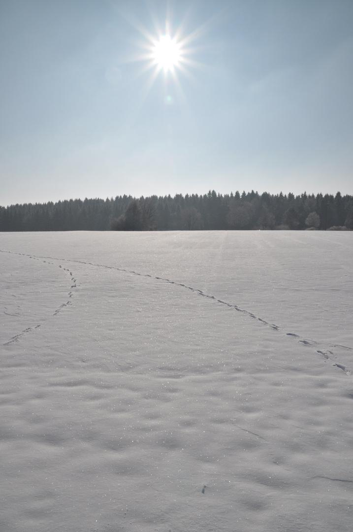 Spuren im Schnee 01