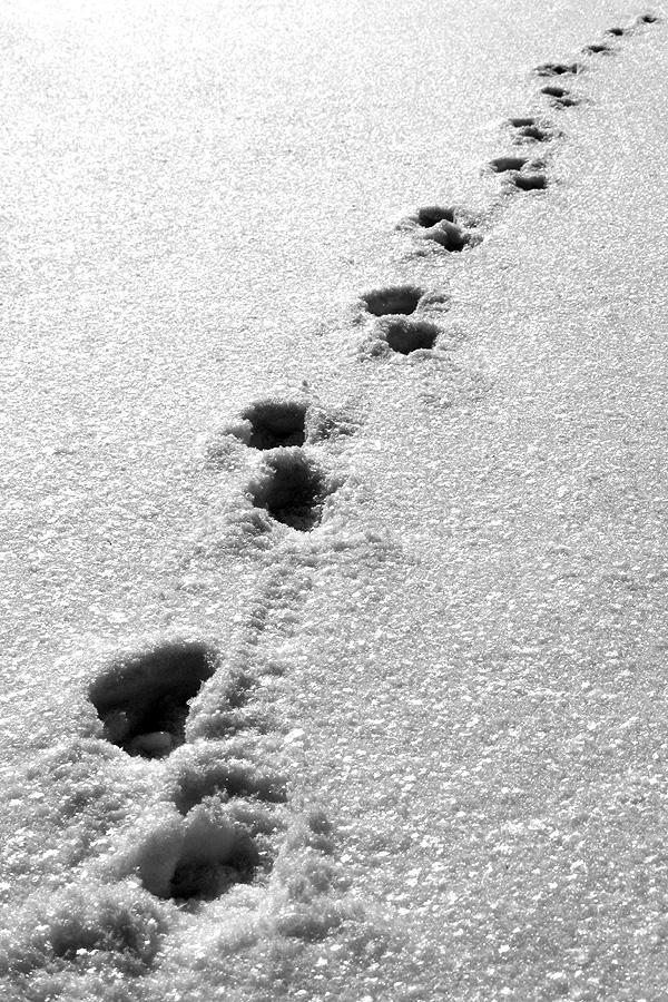 Spuren im Schnee...