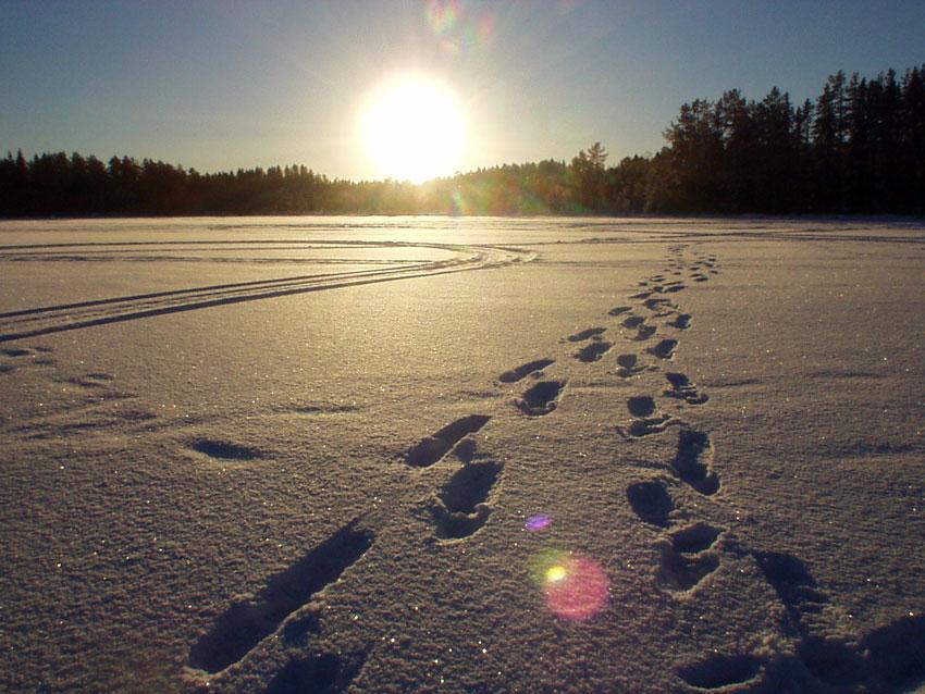 Spuren im Schnee - bei Hamra in Schweden
