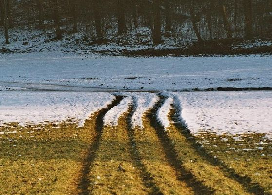 Spuren im schwindenden Schnee