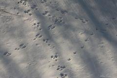 Spuren in Schnee