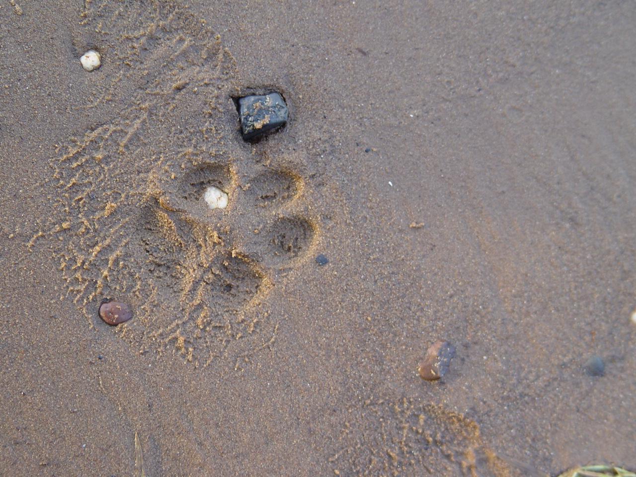 Spuren vom Hund!!!