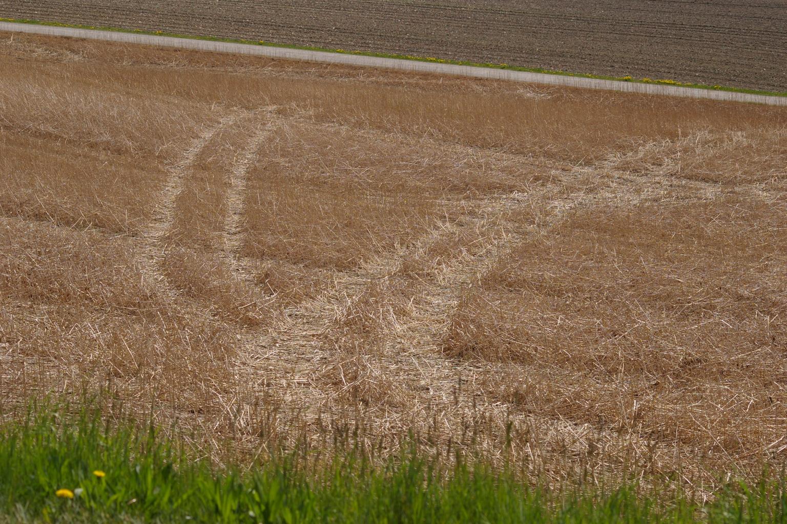 Spuren von Traktor mit Güllefaß