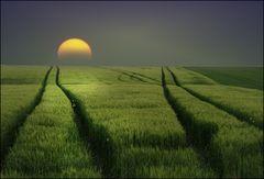 spuren.........oder: glück gibt es nicht, nur die sehnsucht danach....