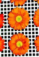 square orange