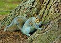 squirrel by Jigora Man