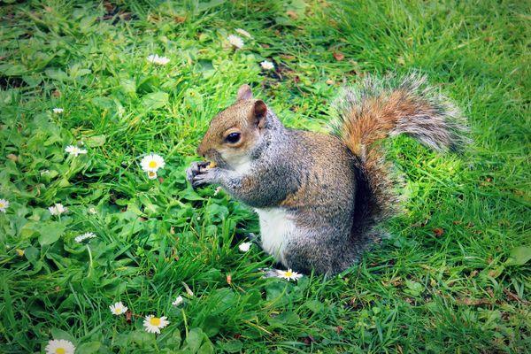Squirrel & Hazelnut