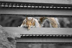 Squirrel in New York
