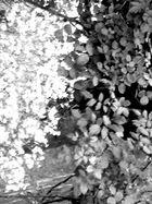 Srauch mit Blüten.