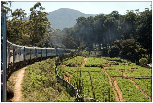 Sri Lanka Bilder & Fotos