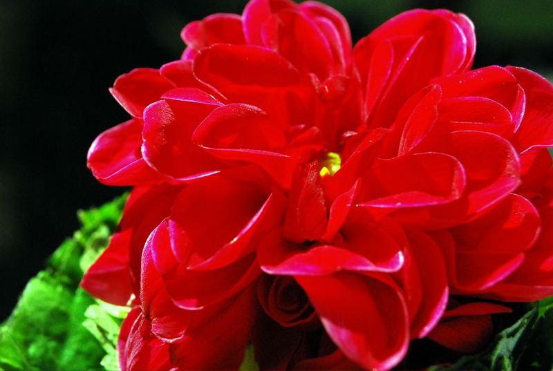 Sri Lankan red