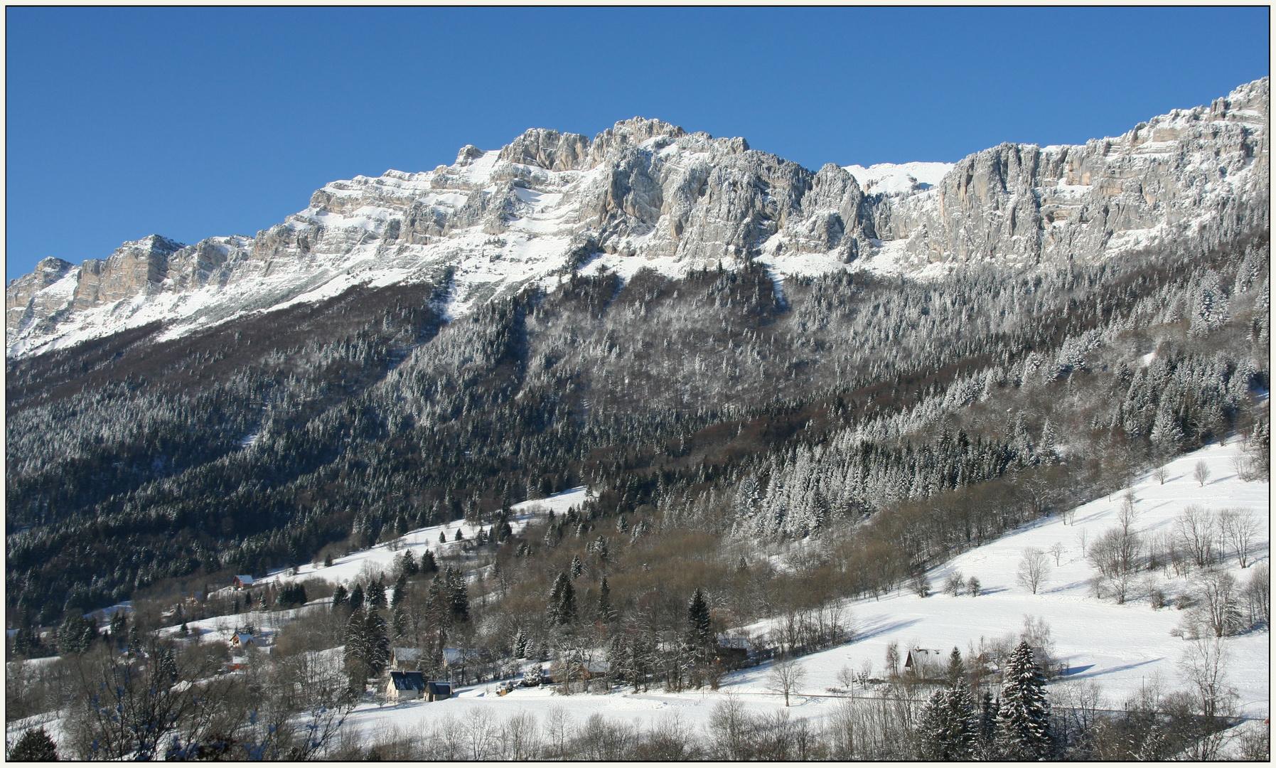 St Bernard sous la neige