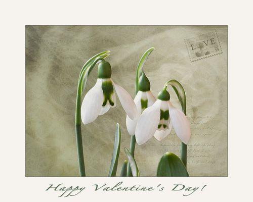 St. Valentines-day....