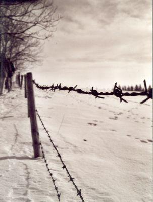 Stachel im Schnee