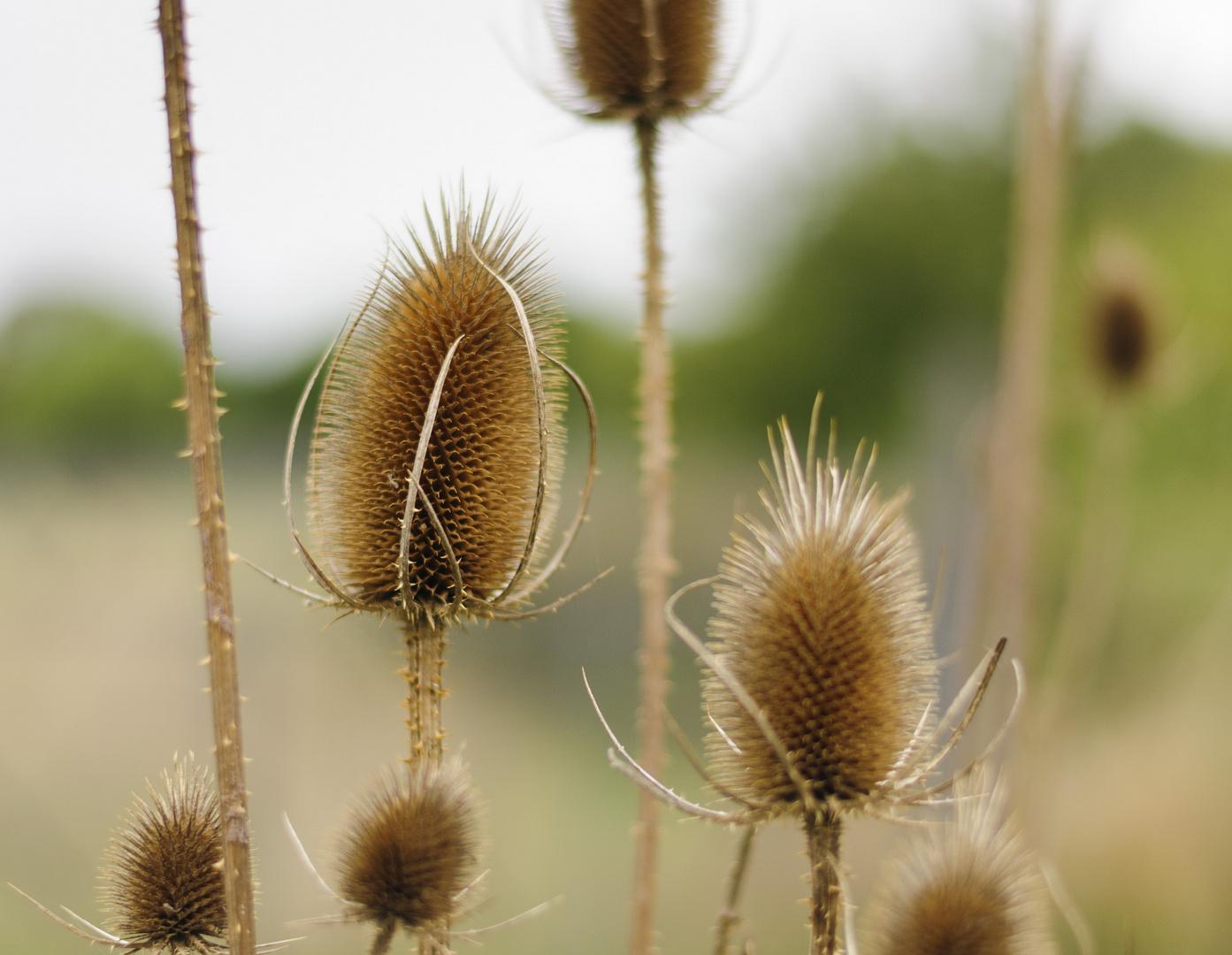 Stachelige Blüte