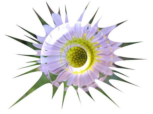 """""""stachelige"""" Blume"""