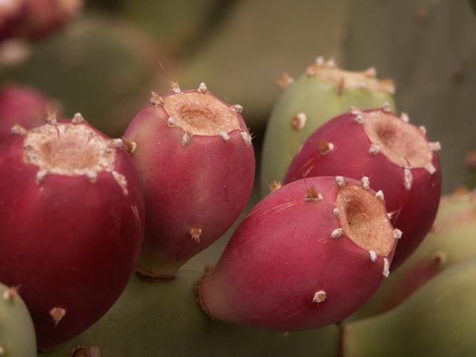 Stachelige Früchte