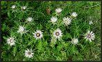 Stachelige Mi-Wo-Blüten....