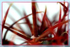 Stacheln / Kaktus