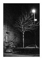 Stadt-Baum